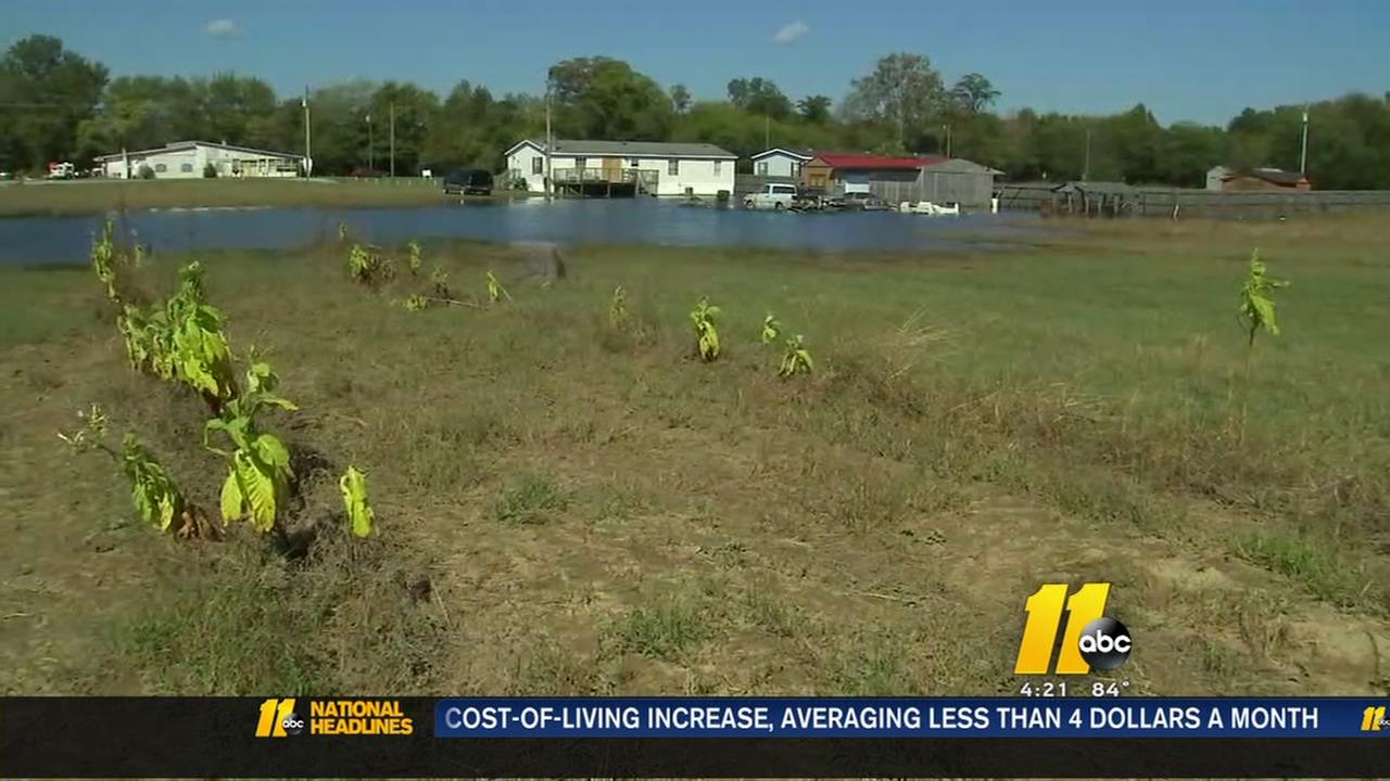 Tarboro farmers crops ruined after Hurricane Matthew