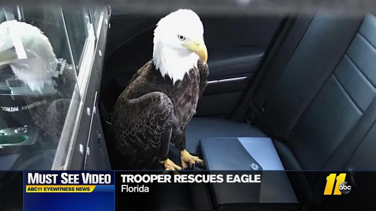 Trooper comes to rescue of bald eagle
