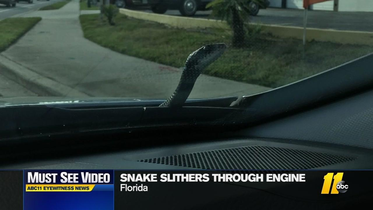 Snake slithers out of car
