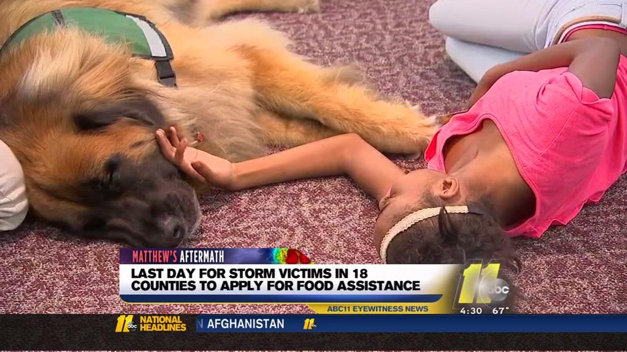 Comfort dog provides emotional support at FEMA recovery