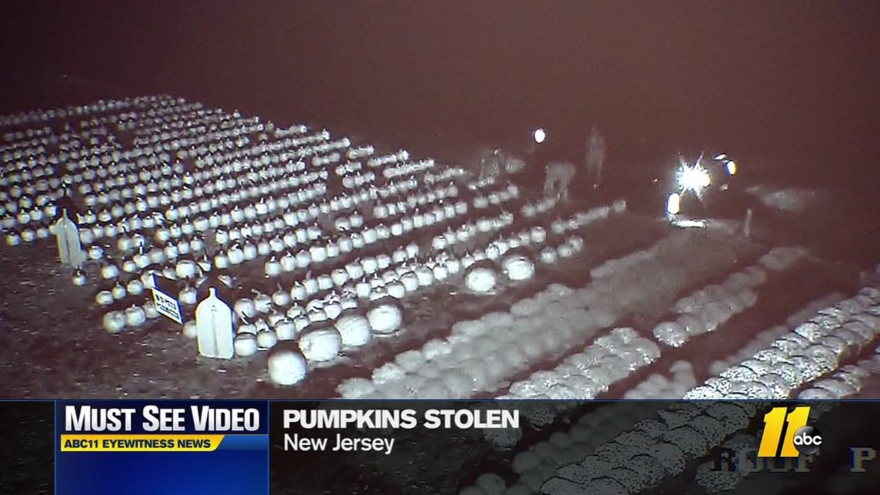 Pumpkins stolen in NJ