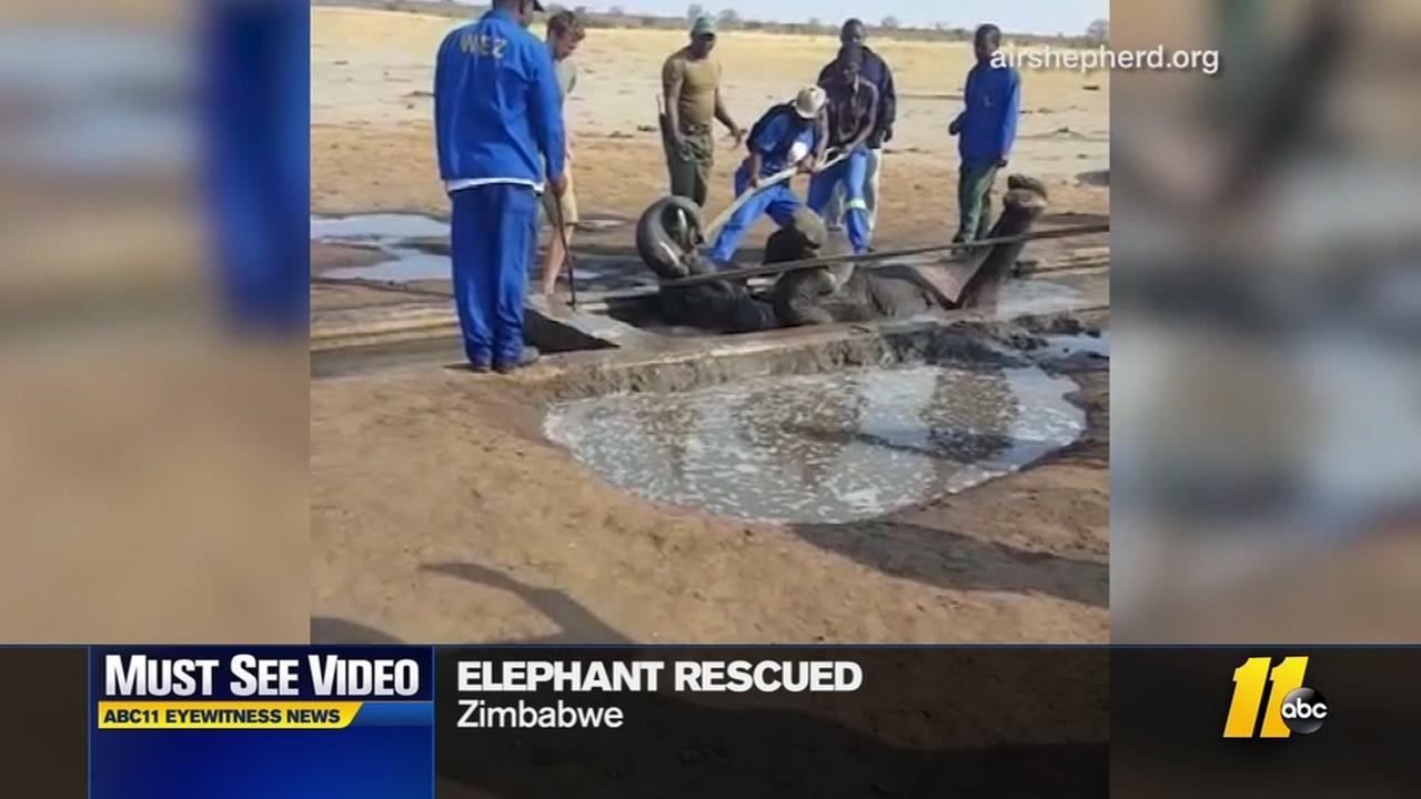Elephant gets stuck in ditch