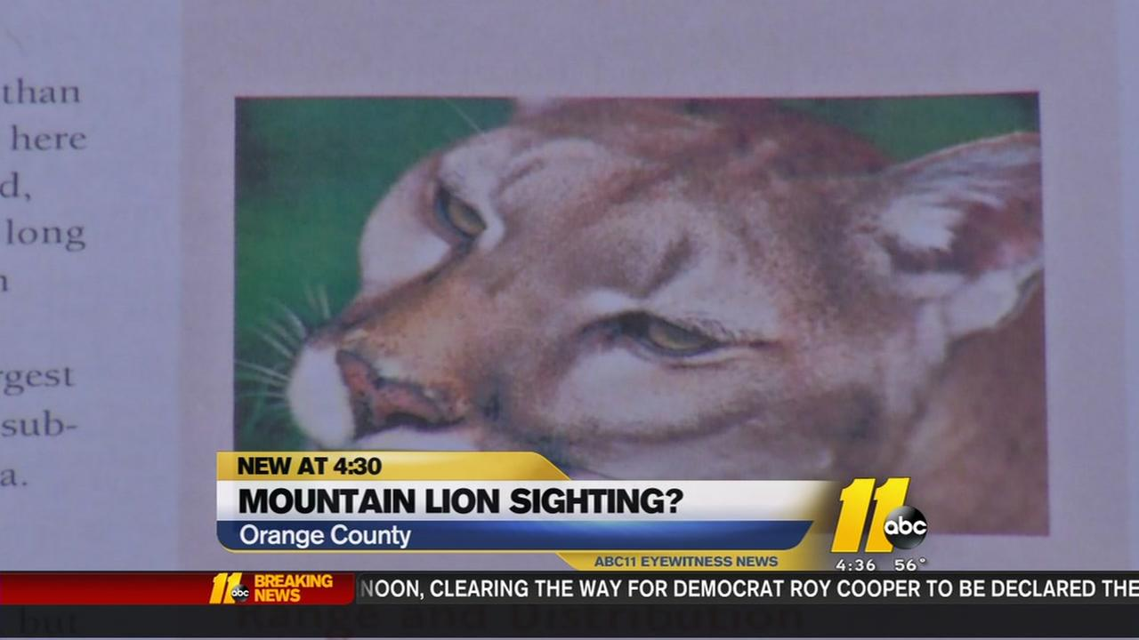 Mountain Lions in the Triangle?