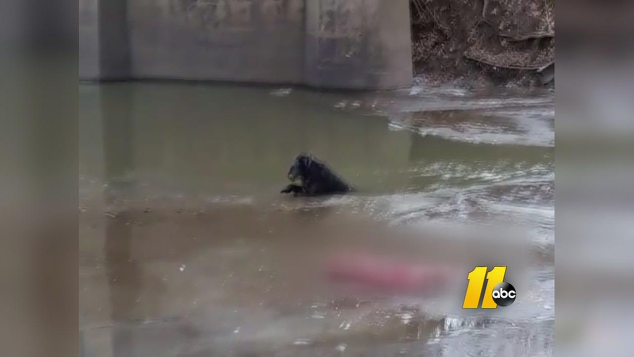 Firefighters rescue dog