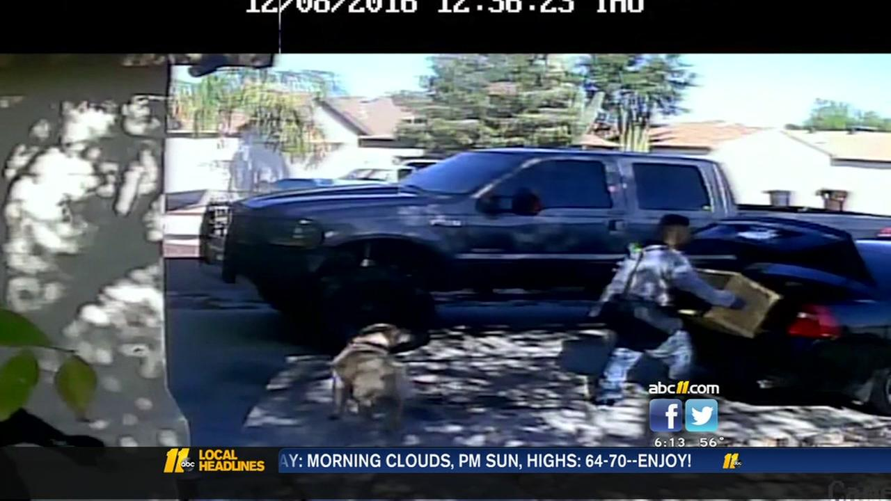 Thieves bribe guard dog