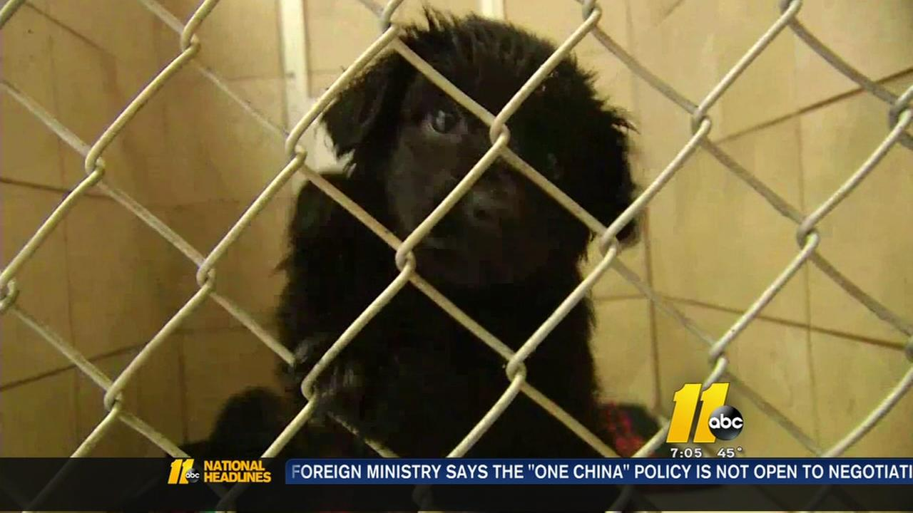 Dogs up for adoption in western NC