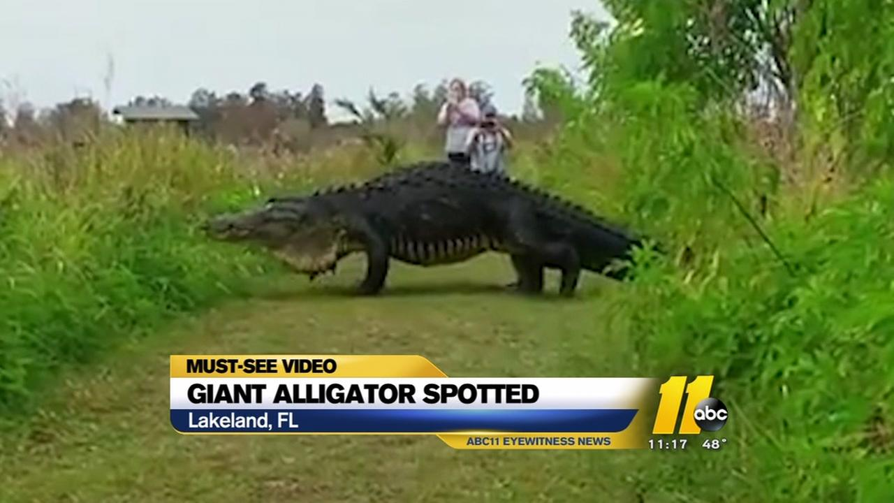 Giant gator spotted at Florida nature center