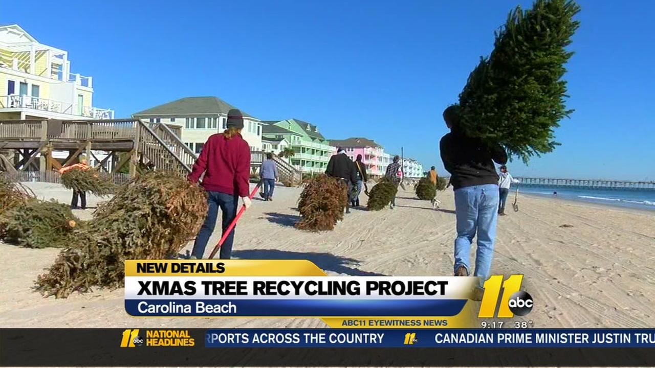 Christmas Tree recycling project