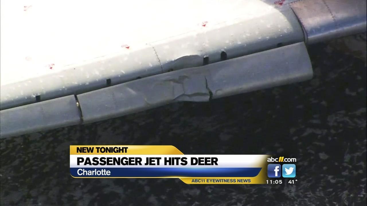 Passenger jet hits deer