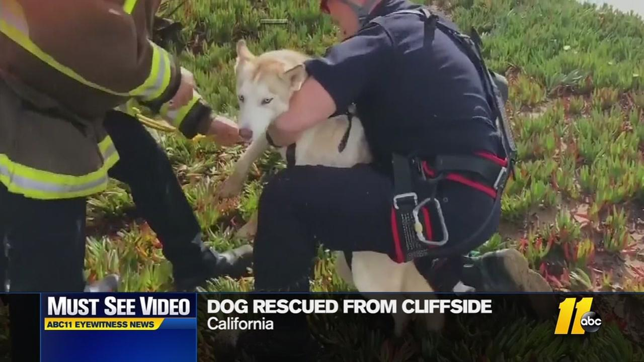 Dog rescued from cliffside in California