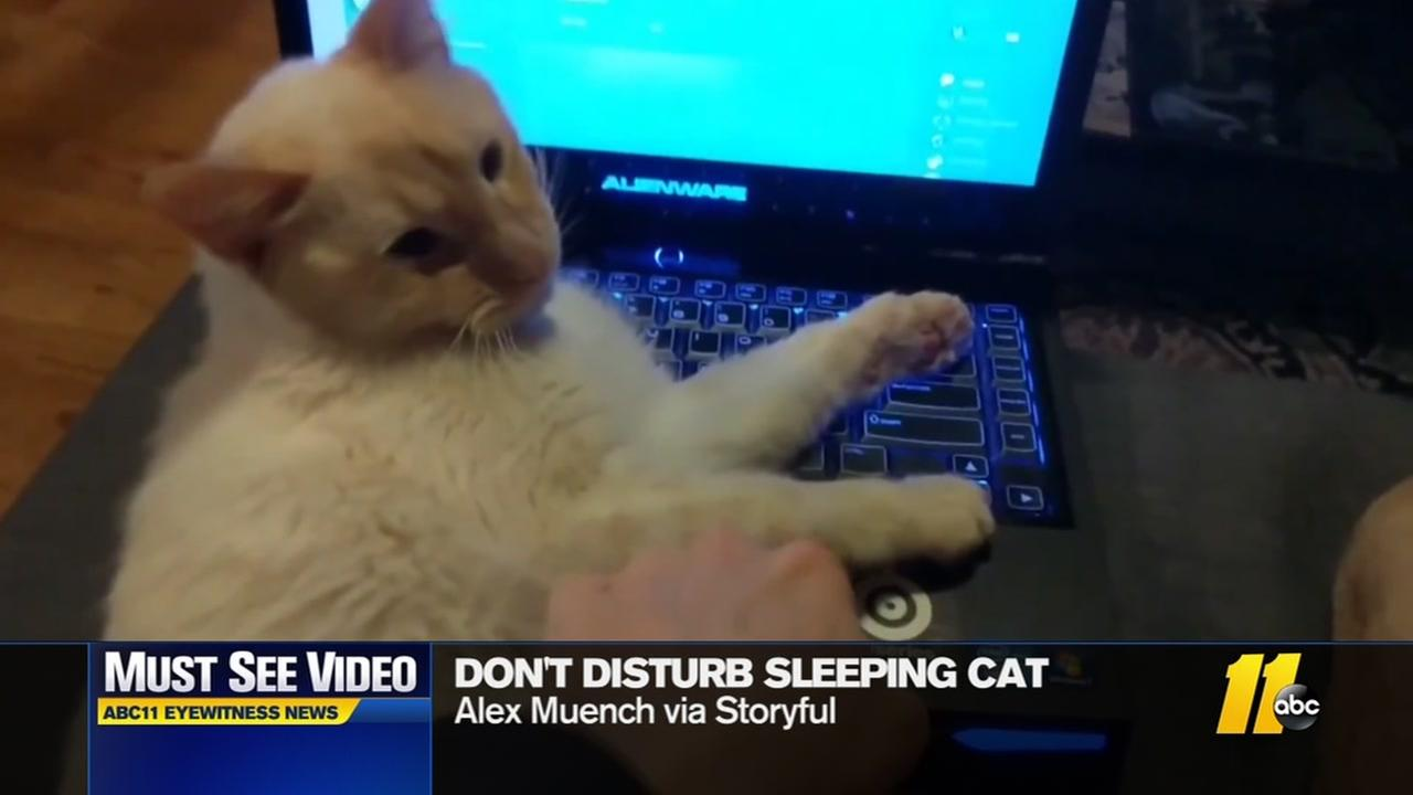 Viral video: why you should never wake a sleeping cat