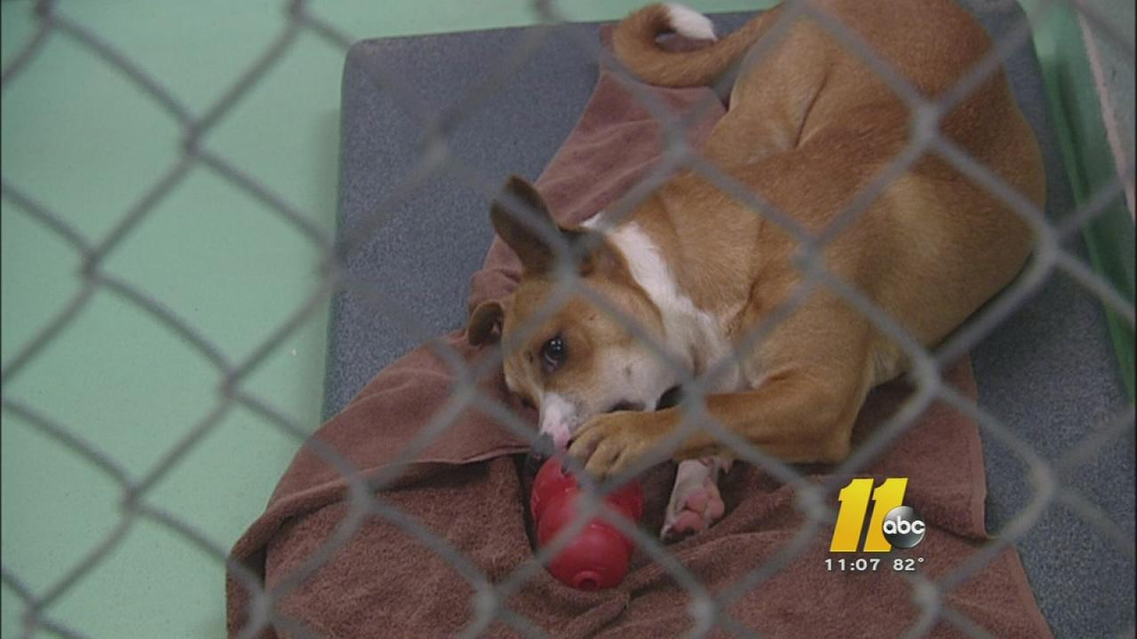 Scam preys on animal lovers in Durham