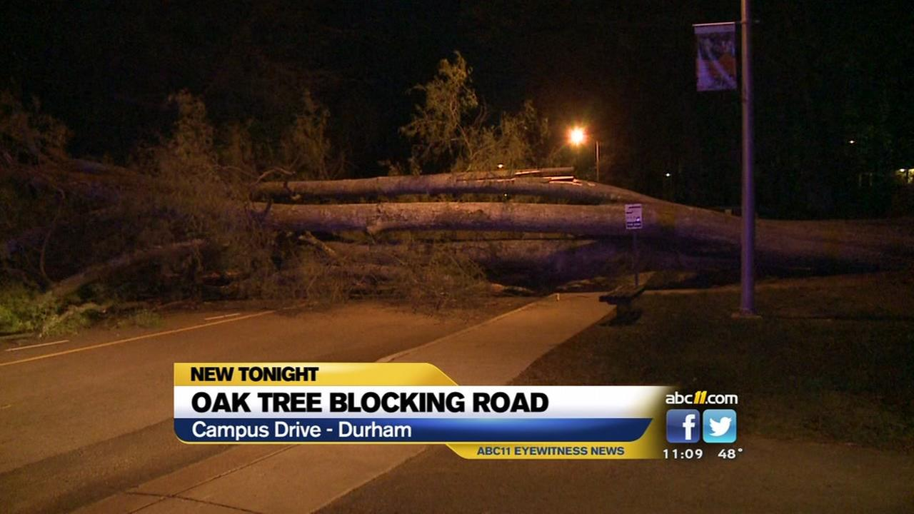 Huge tree blocks road on Dukes campus