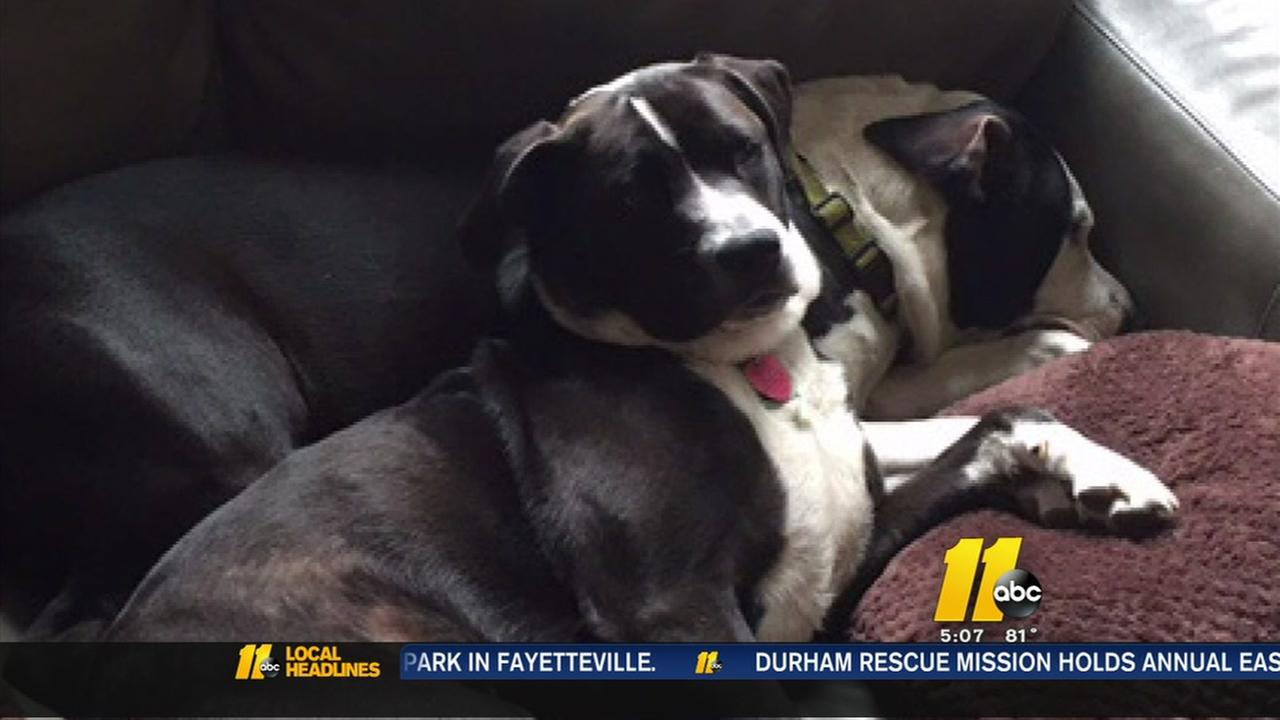 Dog attacks Fayetteville veteran
