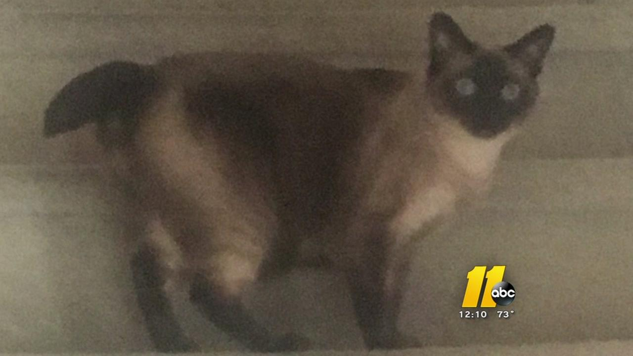 Cat alerts family about carbon monoxide, 3 hospitalized