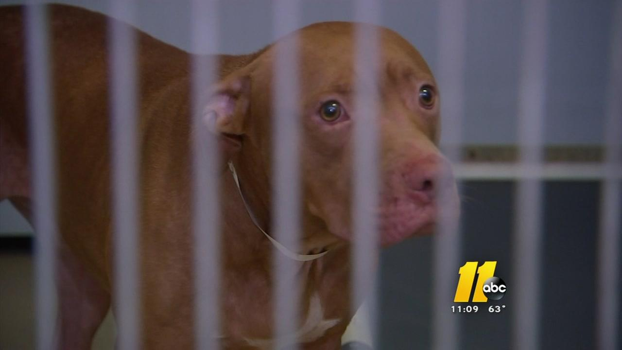 Fayetteville woman recovering after vicious dog attack
