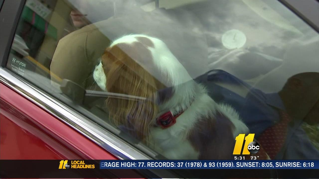 Dogs in hot cars: What you can legally do