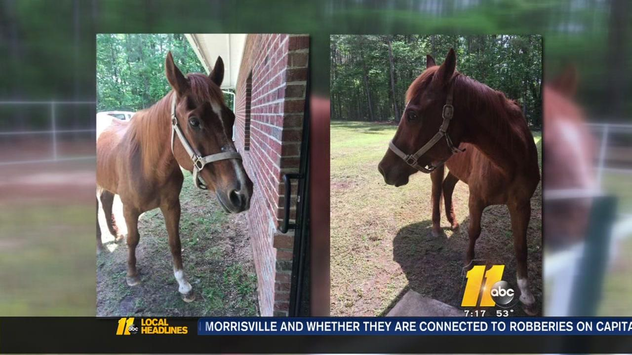 Warren County horse needs a home