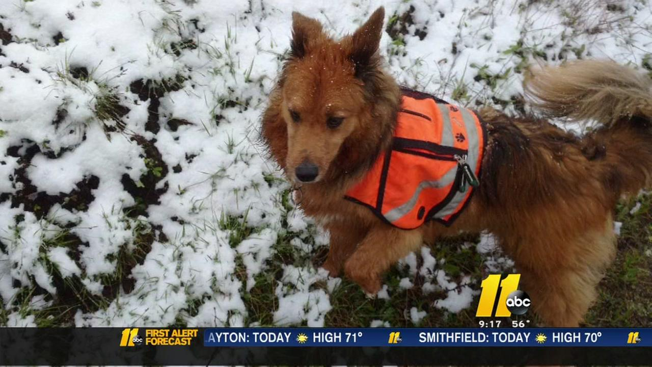 Rare May snow hits NC mountains