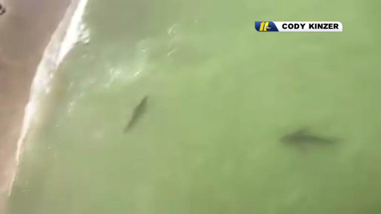 VIDEO Sharks Spotted Close To Shore South Of Myrtle Beach