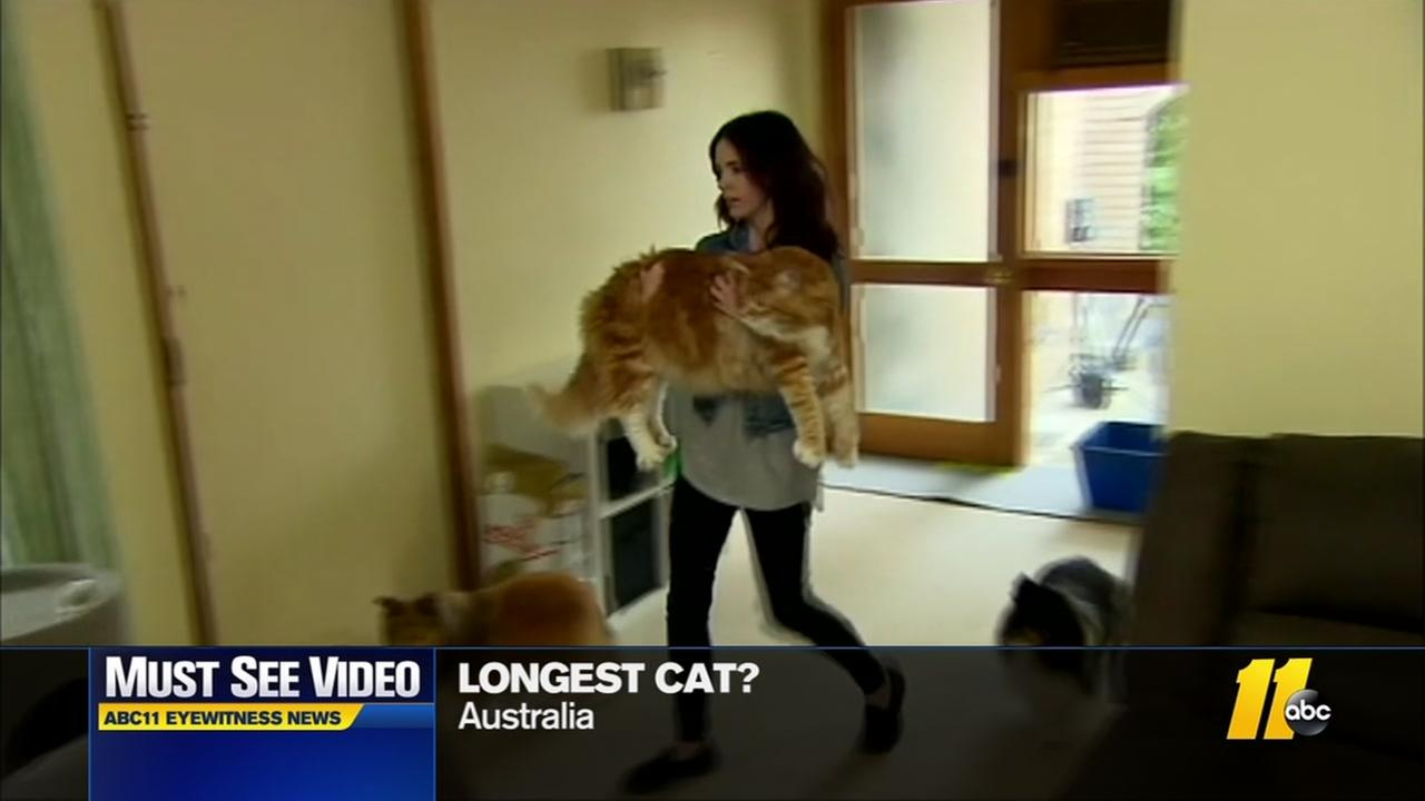 Is this the worlds longest cat?