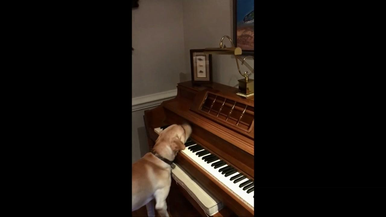 Watch what this pooch does when you say Beethoven