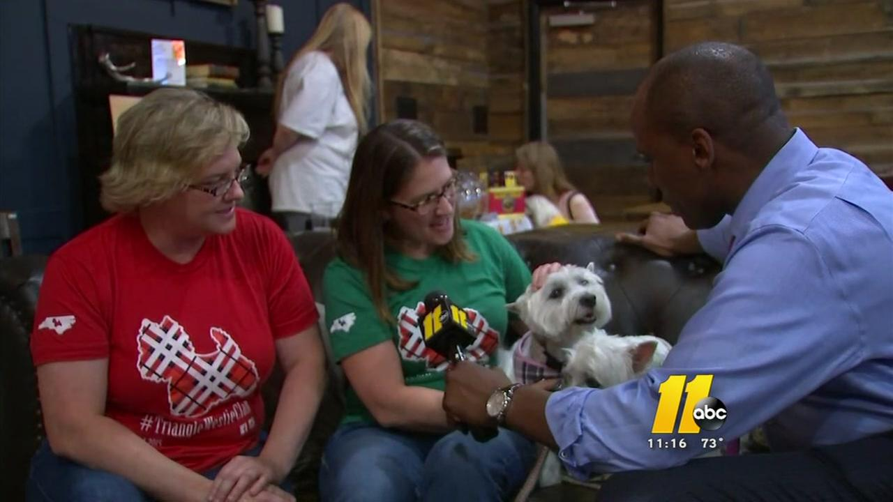 Yappy Hour aimed at stopping dog flu
