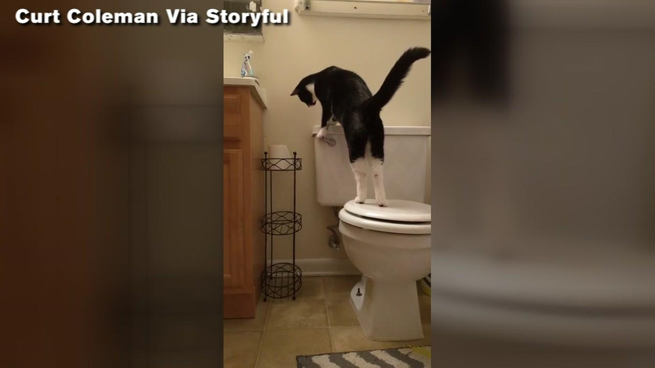 Cat teaches himself how to flush the toilet