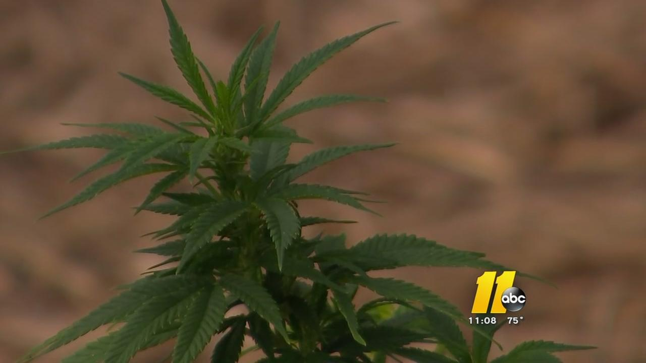 The fast-growing hemp industry in NC