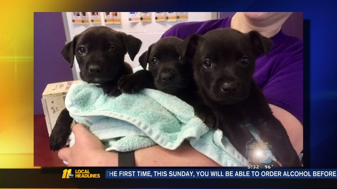 Burned pups are on the mend in Raleigh