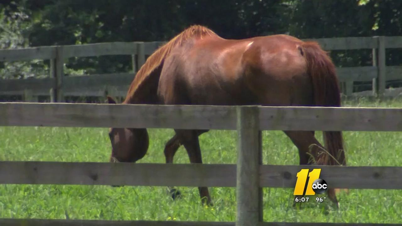 ABC11 investigates reports of neglected horses