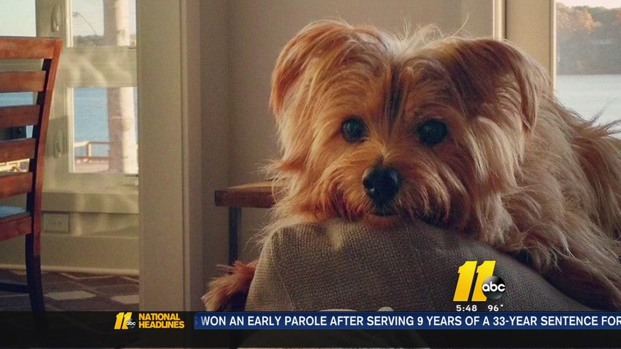 Amber the pup was killed by another dog at a doggie daycare.