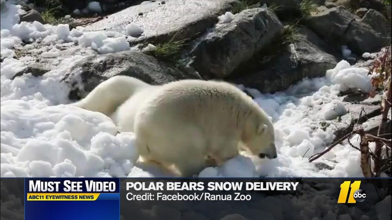 Polar bears get snowy delivery