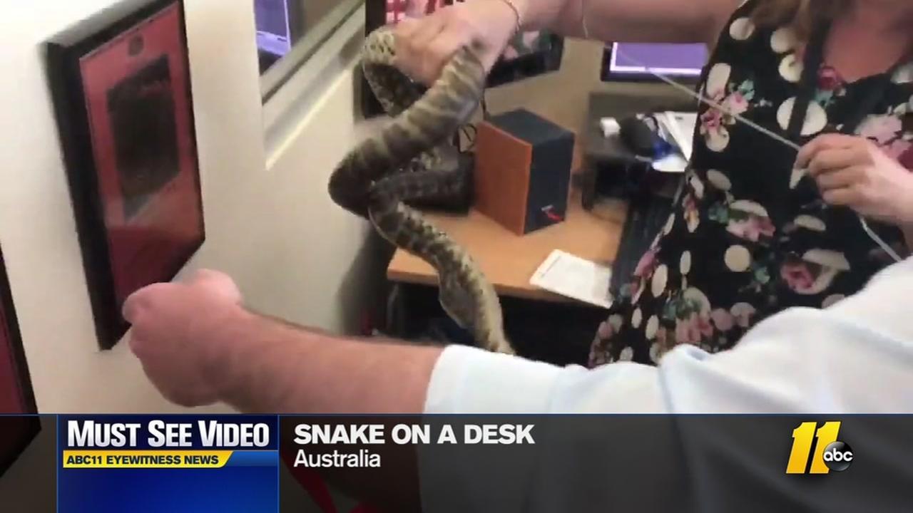Snake found in newsroom
