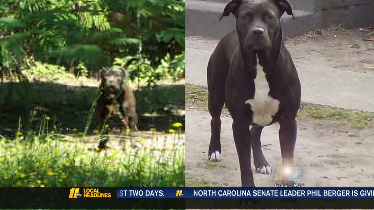 Search on for pit bulls who attacked womans dog