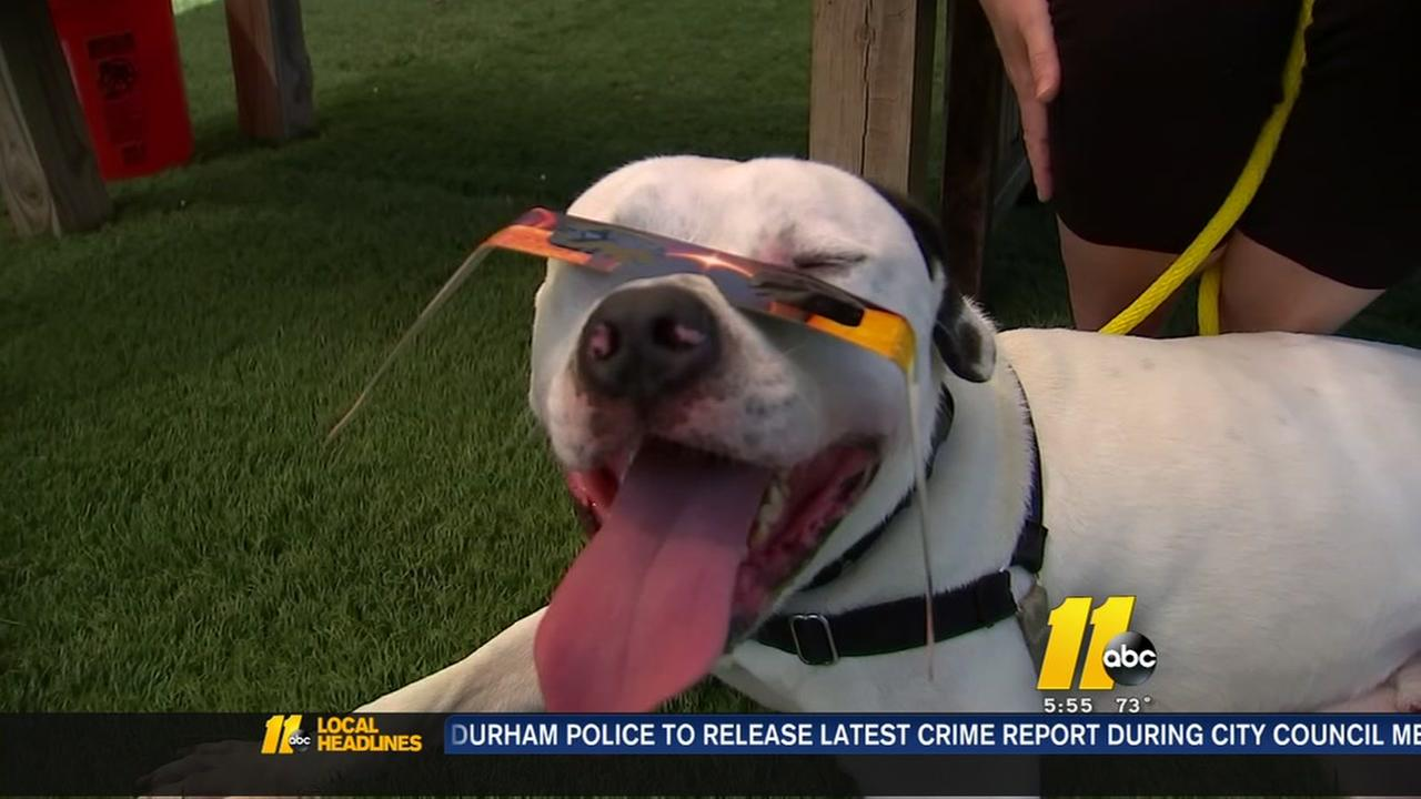 Protecting pets during eclipse