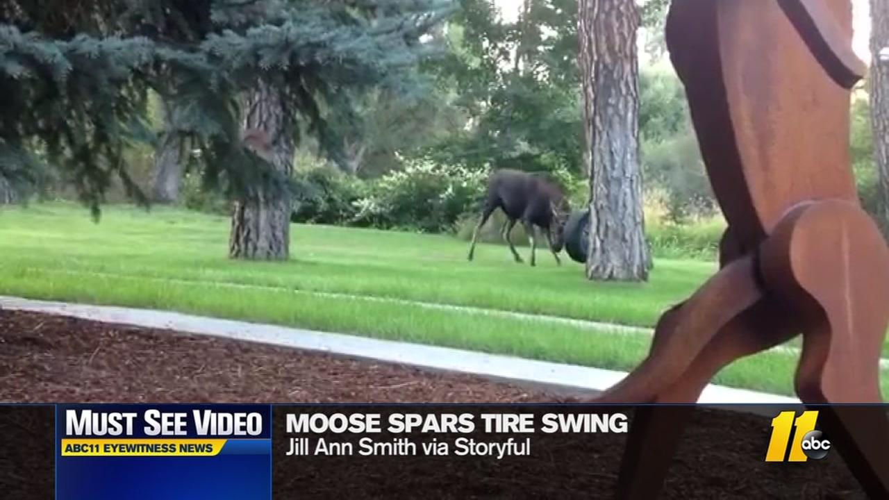 Moose spars with tire swing