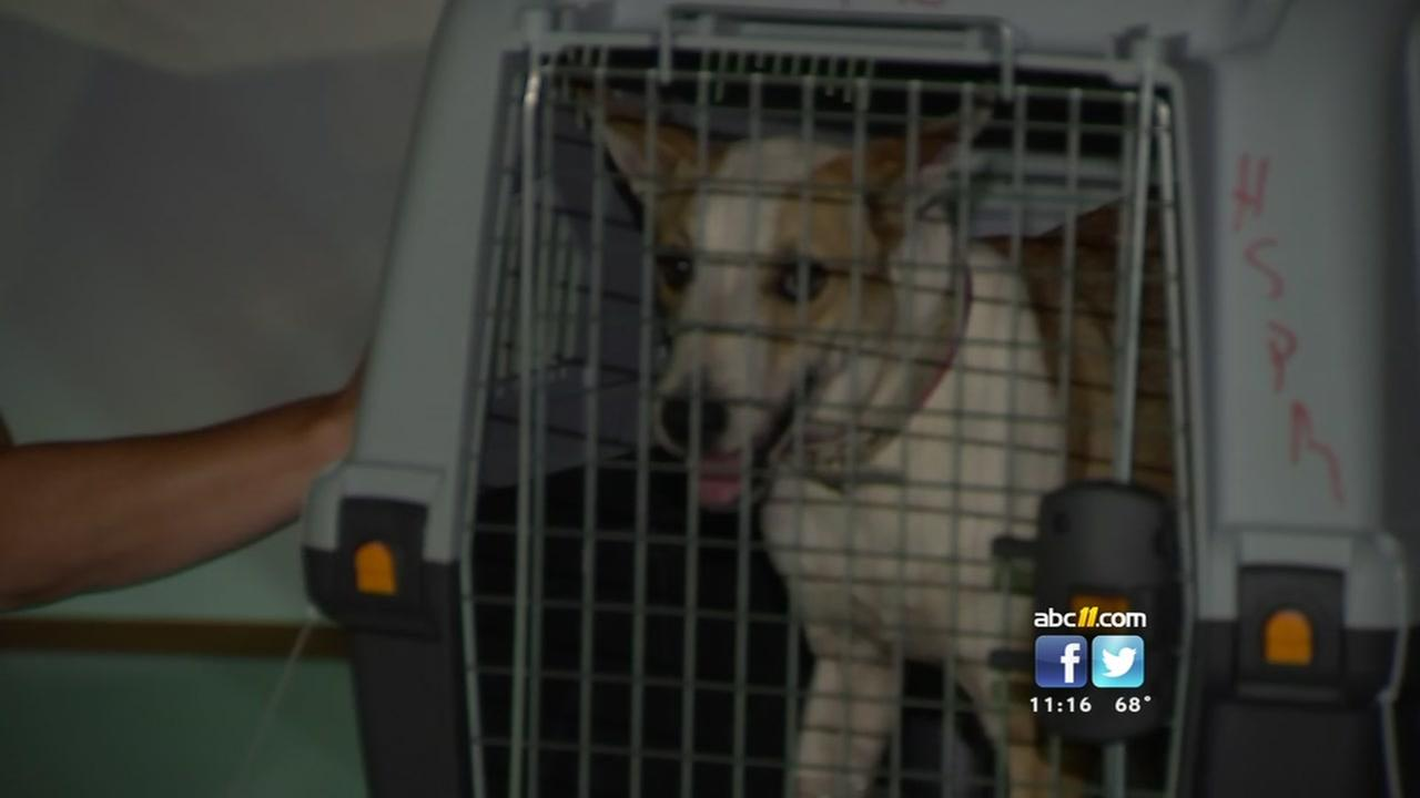 Shelter pets from Puerto Rico arrive at RDU