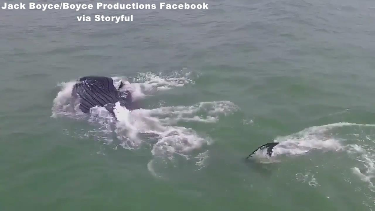 Video: Whale spotted at Kure Beach