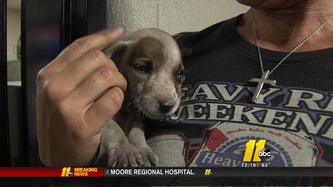 NC puppy stuck in car engine rescued