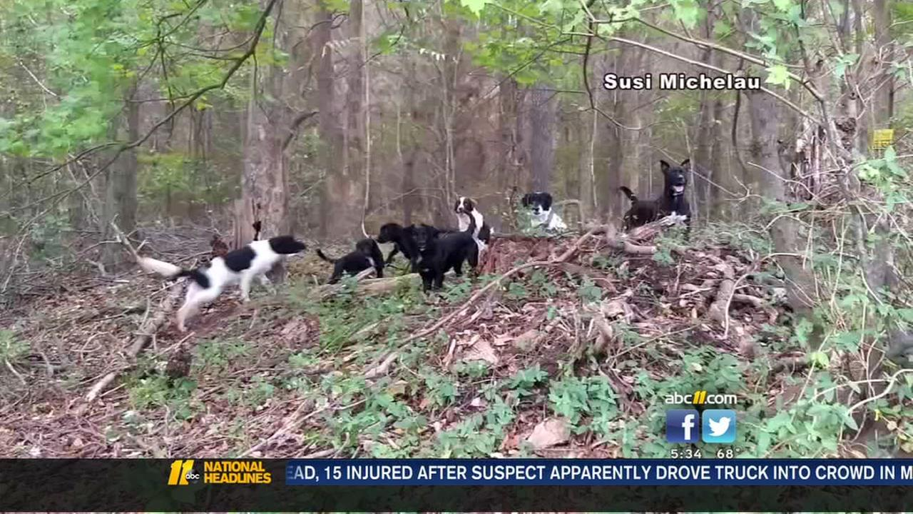 Knightdale horse owner on alert after encounter with wild dogs