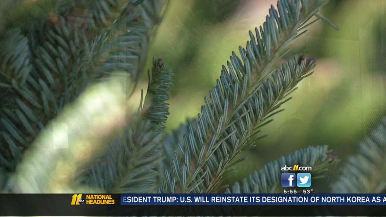 Country could see shortage of Christmas trees this holiday season