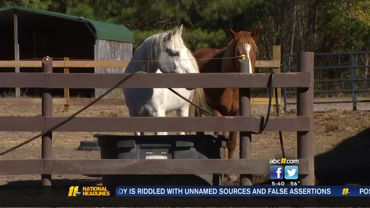 Cumberland County horse rescue ranch seeks the publics help