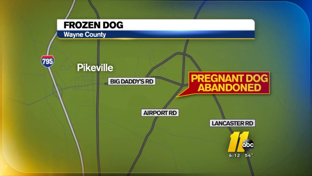Pregnant dog froze to death after abandoned in Pikeville