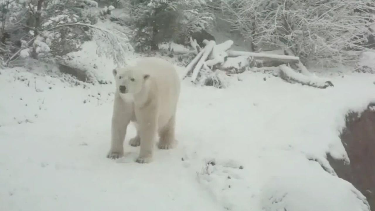 Snow day at NC Zoo