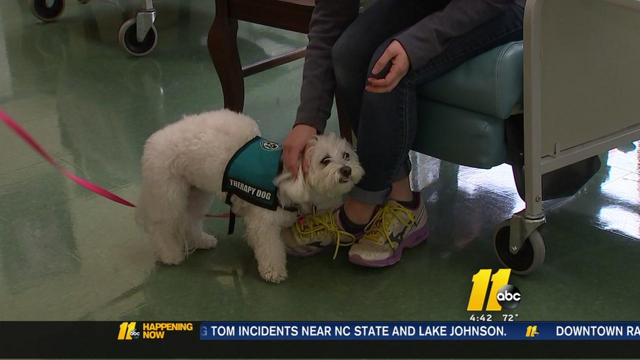 Raleigh fertility clinic is one of the first in the nation to use therapy dogs