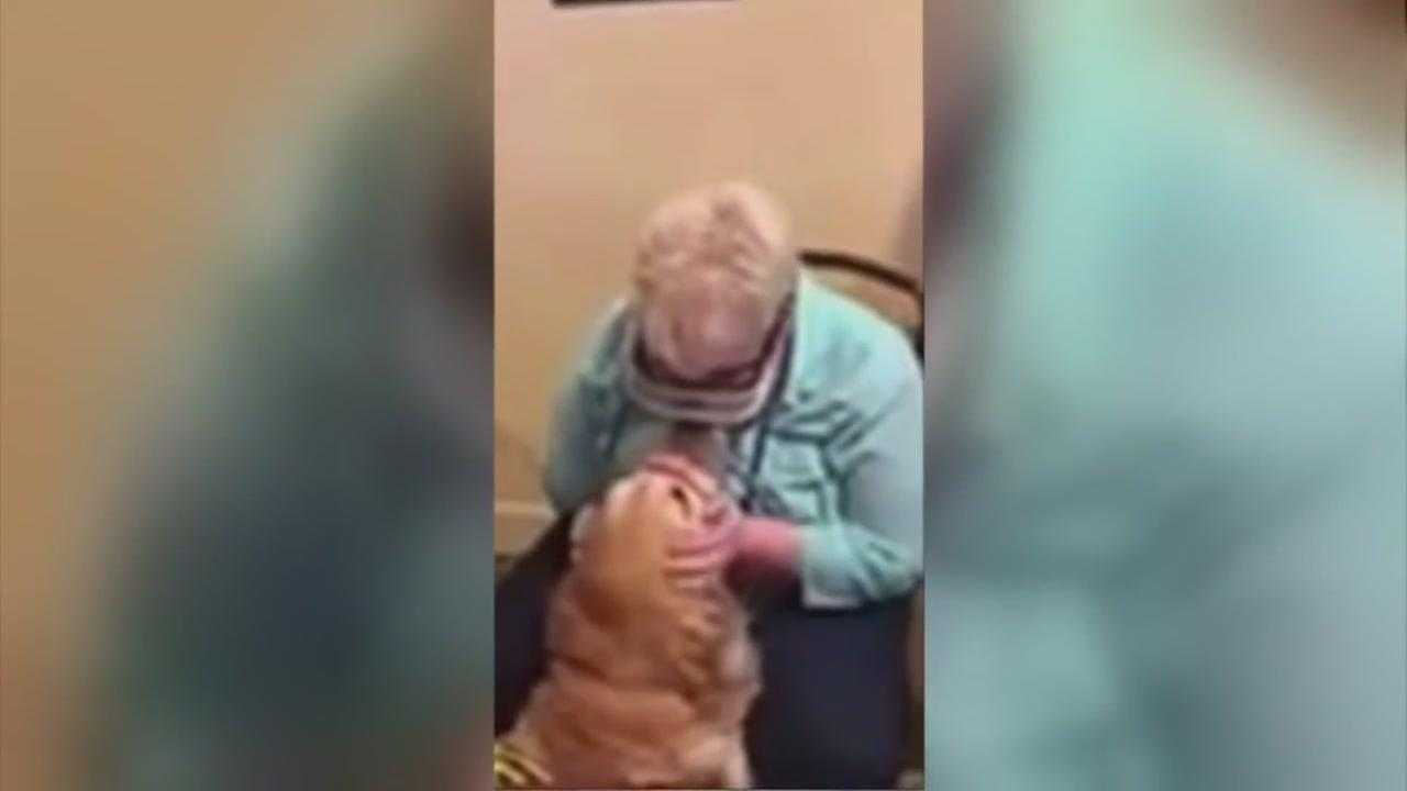 Blind woman sees her guide dog for the first time