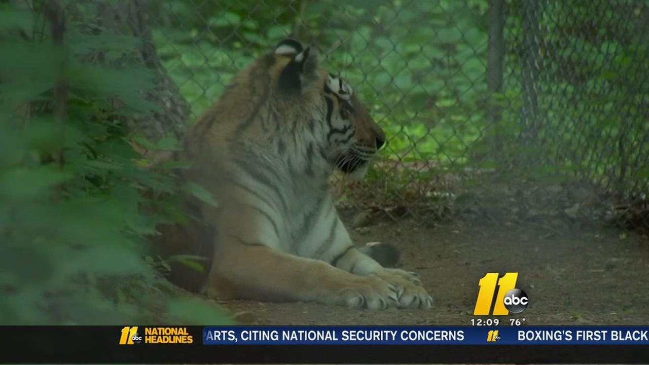 NC Tiger Rescue