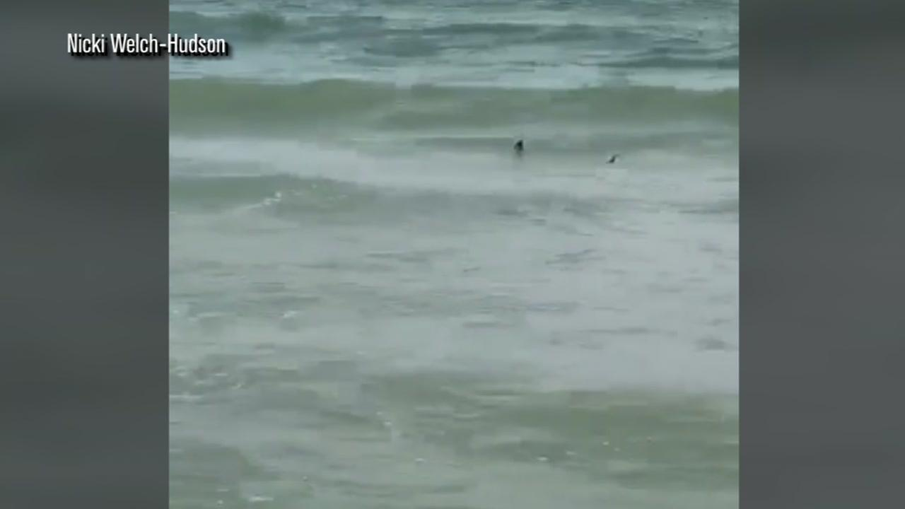 Shark spotted in Myrtle Beach