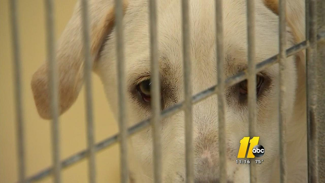 Volunteers deal with compassion fatigue at Cumberland County Animal Shelter
